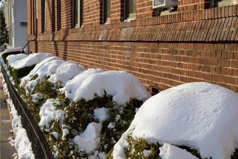 Planten in de sneeuw